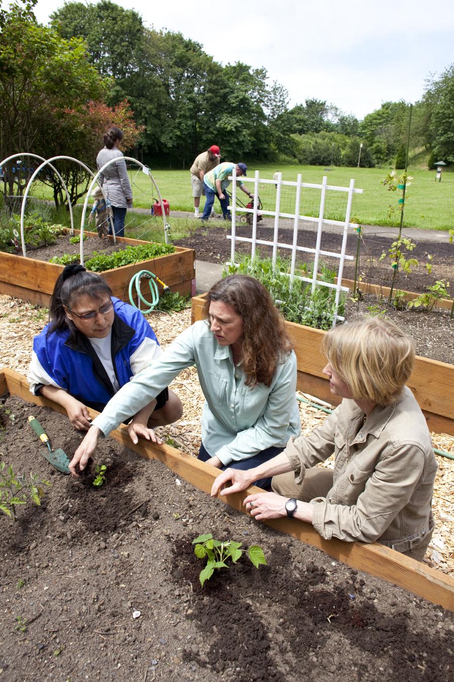 Sharing garden knowledge.